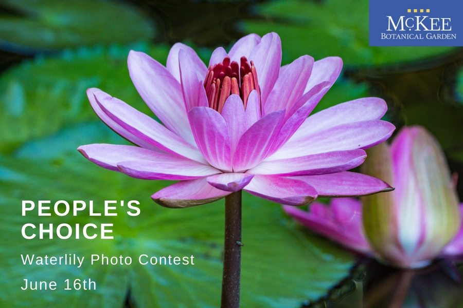 McKee Botanical Garden People's Choice Waterlily Photo Contest