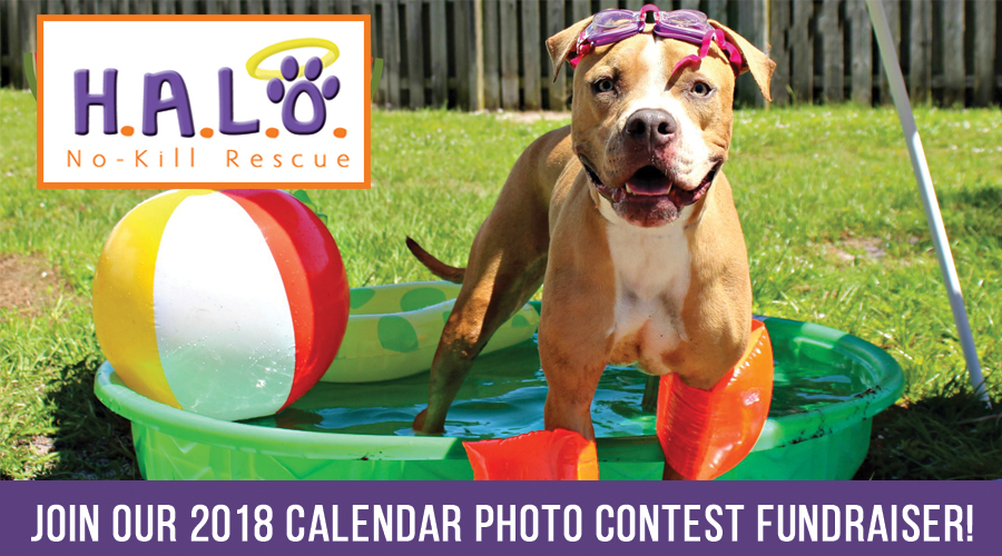 HALO's 2018 Calendar Photo Contest